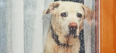 Tras el confinamiento, las mascotas se tienen que adaptar a la nueva normalidad. Foto: Getty Images