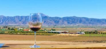 Vino mexicano. Foto: Getty Images
